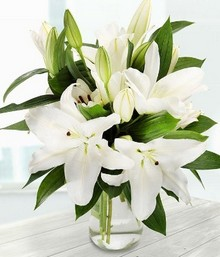 Pure White Lilies*